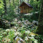 Bärenbeobachtung Slowenien